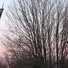 02-24-13 Dayto 01 moon behind trees