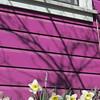 04-04-15 Dayton 02 daffodils