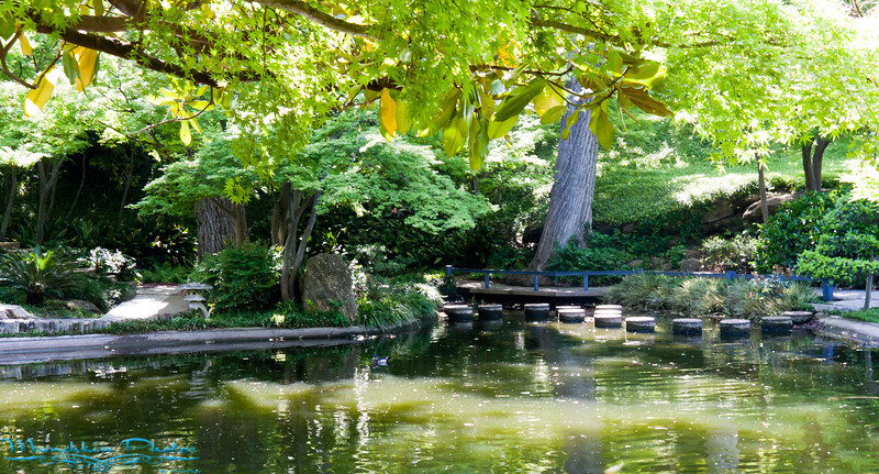 japanese garden pond it has koi