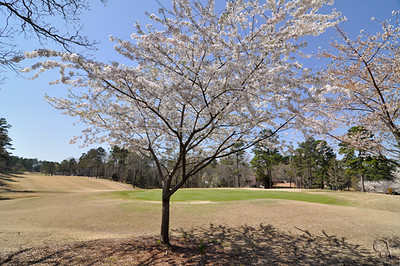 DeSoto Golf Course in April