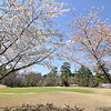 Pear Trees frame green on DeSoto Golf Course in Spring