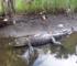 Jacksonville's hidden urban creeks - Hogans Creek