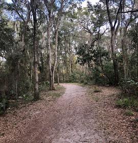 Timucuan Preserve: A walk through Willie Browne's woods
