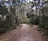 Timucuan Preserve: A walk through Willie Browne's woods