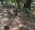 Inside's Jacksonville's Abandoned Pinehurst Cemetery