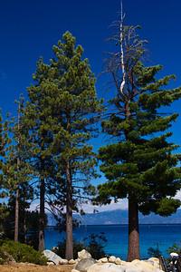 Tahoe weddin 038