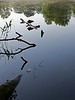 fish pond, Abdij van den Park, Heverlee, Leuven<br /> Olympus E-420 2.8-4.0