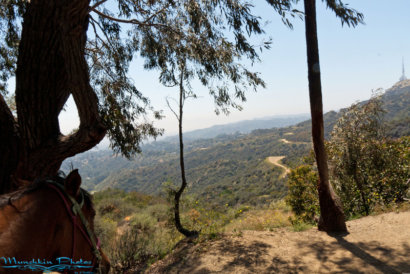 overlooking griffith park