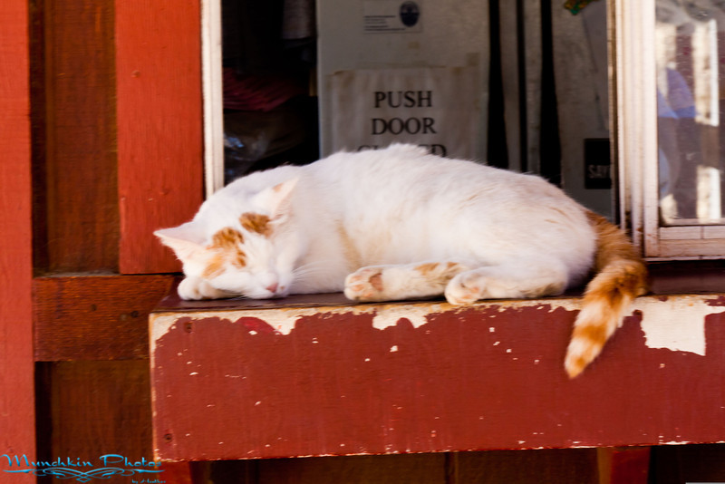 sleeping barn cat