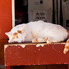 sleeping barn cat