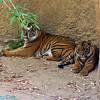mom tiger and her cub
