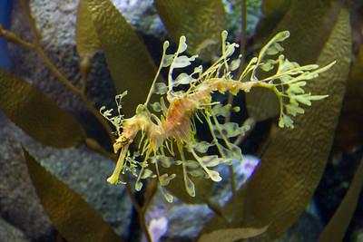 Monterey, Aquarium and Coast 371