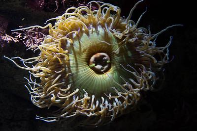 Monterey, Aquarium and Coast 348