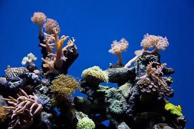 Monterey, Aquarium and Coast 364