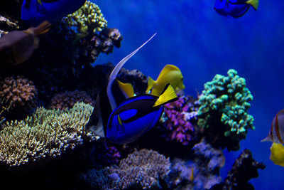 Monterey, Aquarium and Coast 344