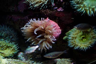 Monterey, Aquarium and Coast 351
