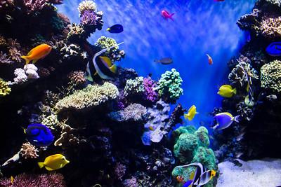 Monterey, Aquarium and Coast 346