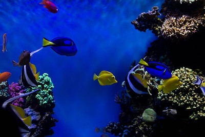 Monterey, Aquarium and Coast 342