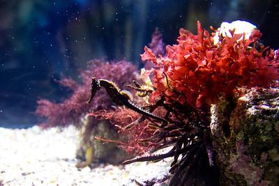 Monterey, Aquarium and Coast 396