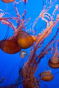 Monterey, Aquarium and Coast 308