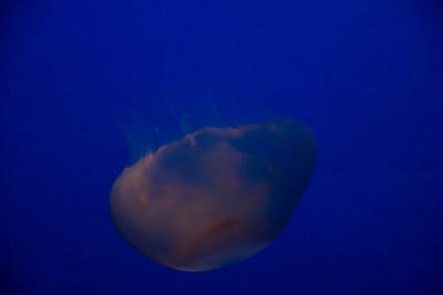 Monterey, Aquarium and Coast 331
