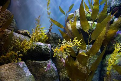 Monterey, Aquarium and Coast 374