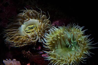 Monterey, Aquarium and Coast 350