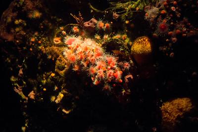 Monterey, Aquarium and Coast 434