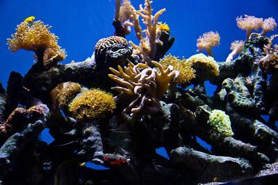 Monterey, Aquarium and Coast 367