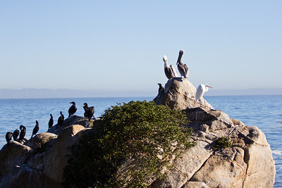 Monterey Ca 296
