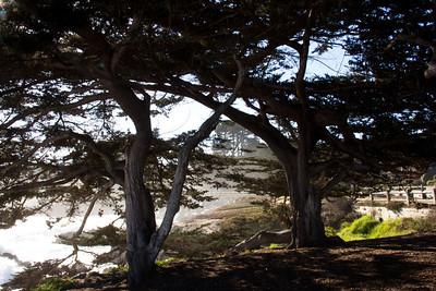 Monterey Ca 208