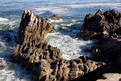 Monterey Ca 259