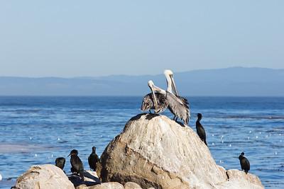 Monterey Ca 289