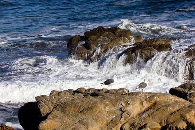 Monterey Ca 140