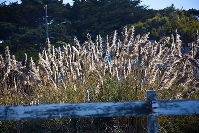 Monterey Ca 404