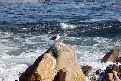 Monterey Ca 182