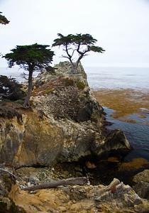 Monterey, Aquarium and Coast 258