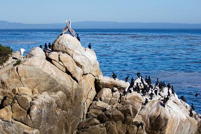 Monterey Ca 293
