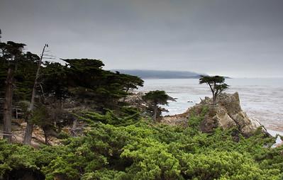 Monterey, Aquarium and Coast 243