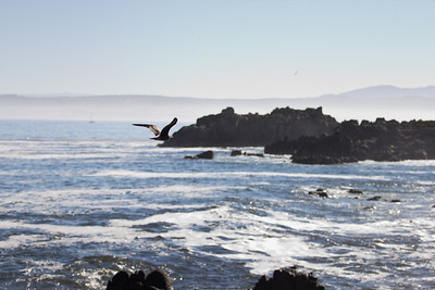 Monterey Ca 306