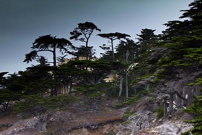 Monterey, Aquarium and Coast 255