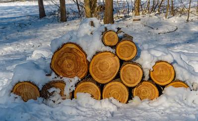 Wintery Logs