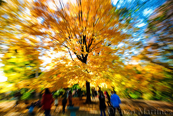 Central-Park-Tree-NYC-Warp-Speed