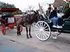 Donkey Tour Guides