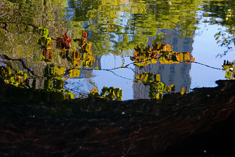 <center>Reflected Leaves  <br><br>New York, NY</center>