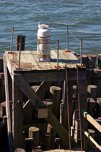 <center>Seagull on the Docks  <br><br>New York, NY</center>