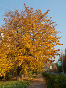 Autumn in Obninsk