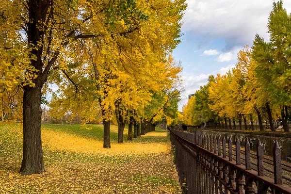 Autumn In West Park