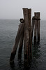 <center>Pilings  <br><br>Here's something else I can't resist: Pilings.  I like how they stand out against the fog here.  <br><br>Prudence Island, Rhode Island</center>