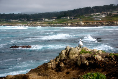 Pebble Beach area